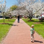 Running around Third Street Park in downtown Macon where the cherry blossom trees are in full bloom.