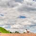 etowah-indian-mounds-13.jpg