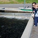 Heidi and Trey check out the fish at the Lake Burton Trout Hatchery adjacent to Moccasin Creek State Park