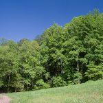 unicoi-state-park-05.jpg