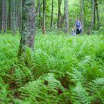 Walking through a forest floor of ferns