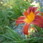 victoria-bryant-state-park-04