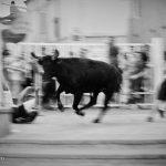 An unlucky participant gets pummelled by a bull